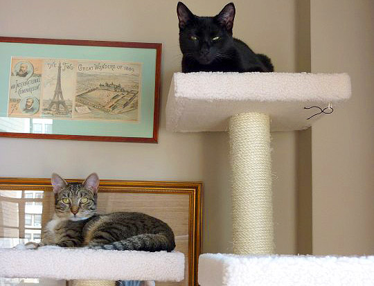 Ted's Cats Sonny & Cher