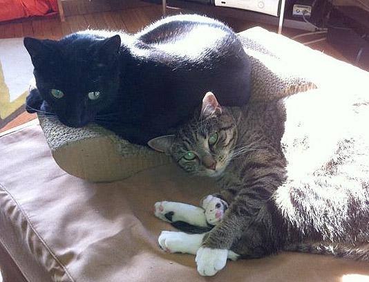 Cats Sonny & Cher 2