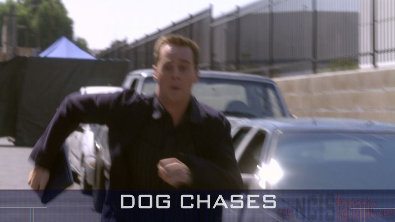 05 Dog Chases